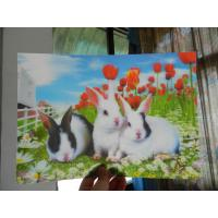 China China OK3D RIP 3D technology PET 3D lenticular photo printing Poster-High definition lenticular 3d picture wholesale