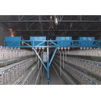 China Automatic Poultry Farming Equipment System for Chicken wholesale