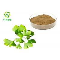 China Dried Ginkgo Biloba Leaf Extract Powder Water Soluble Flavones 24% Lactones 6% wholesale