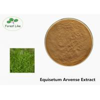 Quality Fine Size Plant Herbal Extract Powder Natural Equisetum Arvense Extract for sale