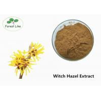 China Natural Witch Hazel Extract Powder wholesale