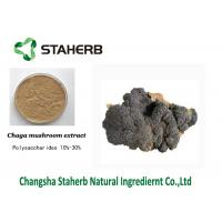 China Anti-Tumor Chage extract Male Enhancement Powder Mushroom Extract Powder on sale