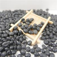 China Natural Organic Agro-products Processing Grade AA  8.0mm-10.0mm  Black Bean With Green Kernel wholesale