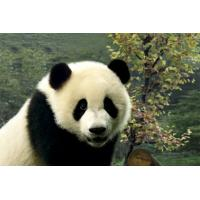 Buy cheap Cute Panda Style Custom 3D Printing Service Business Printing Services from wholesalers