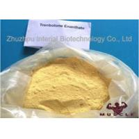 China Raw Yellow Crystalline Trenbolone Enanthate Powder , Tren E Steroids For Lean Muscle wholesale