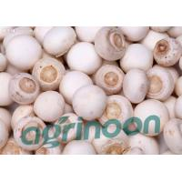 China fresh champignon mushroom wholesale
