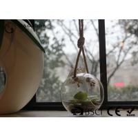 China Clear Glass Hanging Terrarium / Hanging Glass Plant Holders Anti Corrosion wholesale