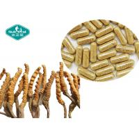 China Immune Support Cordyceps Sinensis Extract 300mg Herbal Health Supplements on sale