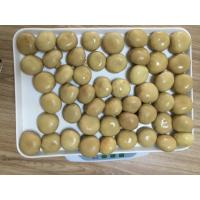 China Factory Price NEW SEASON Brown Canned Champignon Mushroom Whole in Brine N.W.2840G on sale