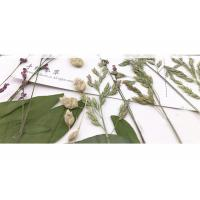 China Original Wild Grass Weed Large Pressed Flowers For Aroma Wax Candles wholesale