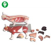 China Realistic Animal Cat Anatomy Model Medical Science Education 40*16*35.5cm on sale