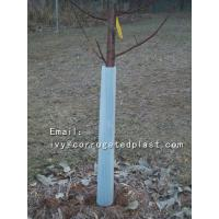China Easy fold, strong and light, Eco-friendly UV protected Corflute Tree Guards on sale