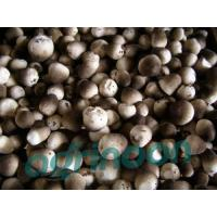 China fresh straw mushroom wholesale