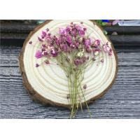 China DIY Handmade Long Dried Flowers , Babys Breath Materials Real Dried Flowers wholesale