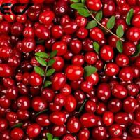 China Anti Aging Organic Food Ingredients Freeze Dried Cranberry Powder Prevents Scurvy wholesale
