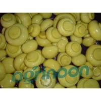 China brine champignon mushroom wholesale