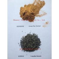 China Plant extract Tea polyphenol 98% wholesale
