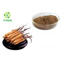 China Pure Cordyceps Sinensis Extract Powder Polysaccharides 10%-50% Adenosine 0.5%-5% on sale