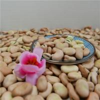 China Natural Organic Agro-products Processing Grade AA 45-80,90-110,120-140grains/100g Yellow Broad Bean wholesale