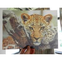 China OK3D whole 3D animal Printing photo with strong 3d deep depth effect printed by UV offset printer wholesale