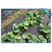 China Biodegradable Garden Weed Control Fabric 100 % Virgin PP Non Woven Film wholesale
