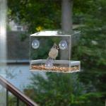 China Wholesale Large Window Bird Feeder - Free Detachable Tray Acrylic Plastic bird feeder with water drain holes wholesale