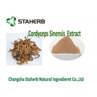 China Cordyceps Concentrated Plant Extract , Polysaccharide Cordyceps Sinensis Extract on sale