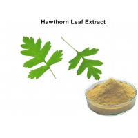 China Hawthorn Leaf Plant Extract Powder 3% Vitexin Lowering Blood Pressure And Blood Fat wholesale