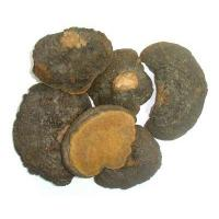 Quality pure natural phellinus linteus mushroom extract used in medicine and health care products for sale