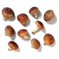 China New Crop Quick Freezing Fresh Mushrooms , Frozen Champignon in Whole on sale