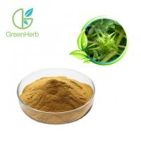 China Tribulus Terrestris Extract Powder 40%- 90% Saponins for Sex Medicine wholesale