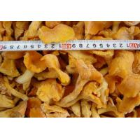 China Frozen cantharellus cibarius wholesale