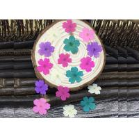 China Handmade Dye Verbena Real Pressed Flowers Color Optional For Specimens Plant wholesale