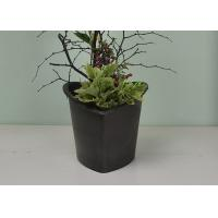 China Flower / Green Plant Self Watering System Bsci Certification With Absorbent Wool wholesale