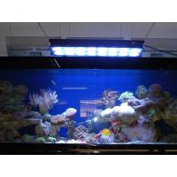 China Apollo Aquarium LED Light for Coral (Apollo-10) wholesale