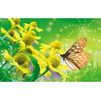 China Cute Butterfly OEM Full 3D Lenticular Printing For Kids Room wholesale