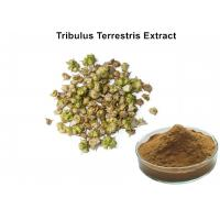 China Tribulus Terrestris Natural Plant Extracts 40% - 90% Saponins For Cardiotonic wholesale
