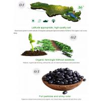 China Natural Organic Agro-products Processing Grade AA 220-600 pcs/100g Black Kidney Beans wholesale