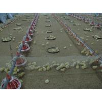 China broiler poultry farm equipment wholesale
