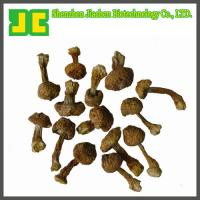 China Agaricus blazei Murill Extract 5:1~20:1 wholesale