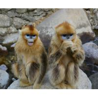 China Animal House Pet Monkey 3D Lenticular Postcard Printing For Gift wholesale