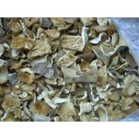 China Dried Oyster Mushroom on sale