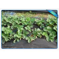 China Winter Keep Heat / Fertilizer PP Nonwoven Agriculture Cultivating Seedling Ground Cover wholesale