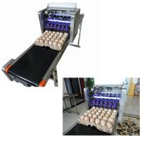 China Automatic Egg Printing Machine For Date , Time , Serial Number wholesale
