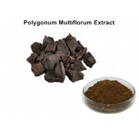 China Polygonum Multiflorum Natural Plant Extracts With 5% Total Anthraquinones wholesale
