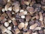 Quality IQF Boletus Edulis whole for sale