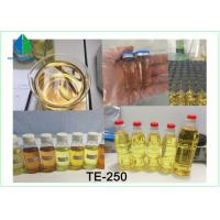 China High Purity Testosterone Enathate Muscle Building Steroids Yellow Liquid for Cutting wholesale