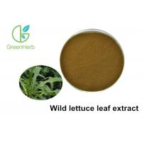 China 100% Pure Natural Wild Lettuce Leaf Extract Resist Radiation Damage wholesale