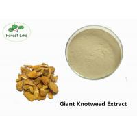 China Medcine Ingredients Giant Knotweed Extract with 90% Polydatin White Powder wholesale