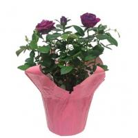Multi Color  Printing Flower Wrapping Pot Covers for Christmas with Kraft Paper / Plastic